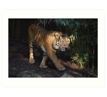 Tiger worried about his cubs Art Print