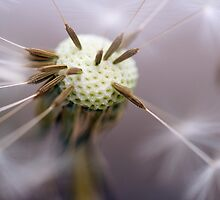 Pin Cushion by Ray Clarke