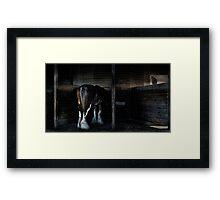 in the stalls Framed Print
