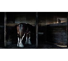 in the stalls Photographic Print