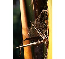 Very abstract spider Web Photographic Print