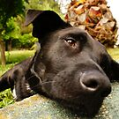 A dogs life :) by Luís Lajas