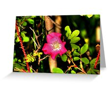 Wild Prairie Rose Greeting Card
