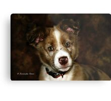 Australian Shepherd Pup Metal Print