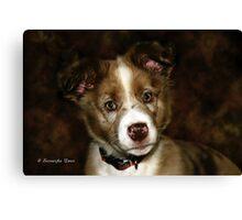 Australian Shepherd Pup Canvas Print