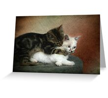 Kittens at play: Huggies and Pampers...  Greeting Card