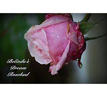 Belinda's Dream Rosebud Photographic Print
