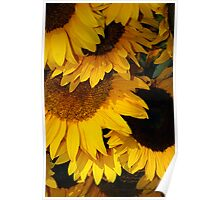 Sunflowers from the Farmers Market Poster