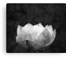 Lotus Projection Canvas Print