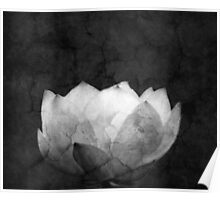 Lotus Projection Poster