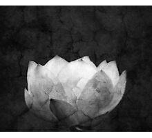 Lotus Projection Photographic Print