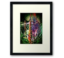 3649 Aloe Framed Print