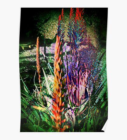 3649 Aloe Poster