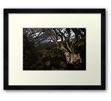 Charlotte Pass - Snow gums view 05 Framed Print