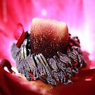 Anemone by eveline