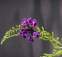 Purple Beauty by spirit01