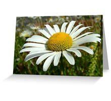 Daisy Greeting Card