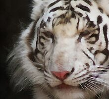 tiger brush by DARREL NEAVES