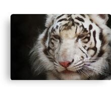 tiger brush Canvas Print