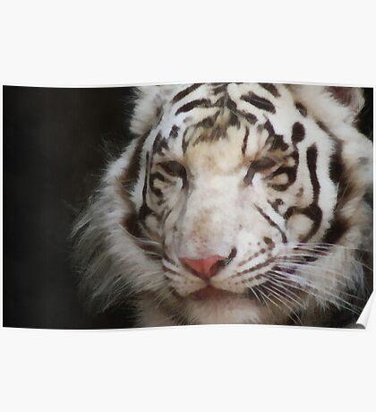 tiger brush Poster