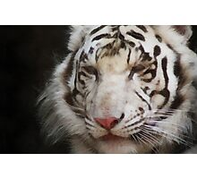 tiger brush Photographic Print
