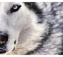 wolf brush Photographic Print