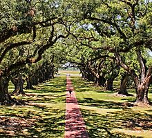 Walking Down Oak Alley by Judy Vincent