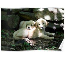 Sundappled Puppies - 10 Poster