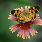 Butterfly and Wildflower by Colleen Drew