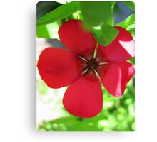 Red & Green Canvas Print