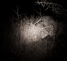 Leopard by night by Neil Messenger