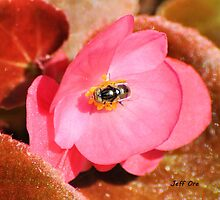 The Fly & the Pink Begonia by Jeff Ore