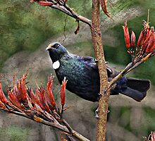 tui on a textured background by Brenda Anderson