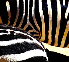 The Striped Fur by dherbsta