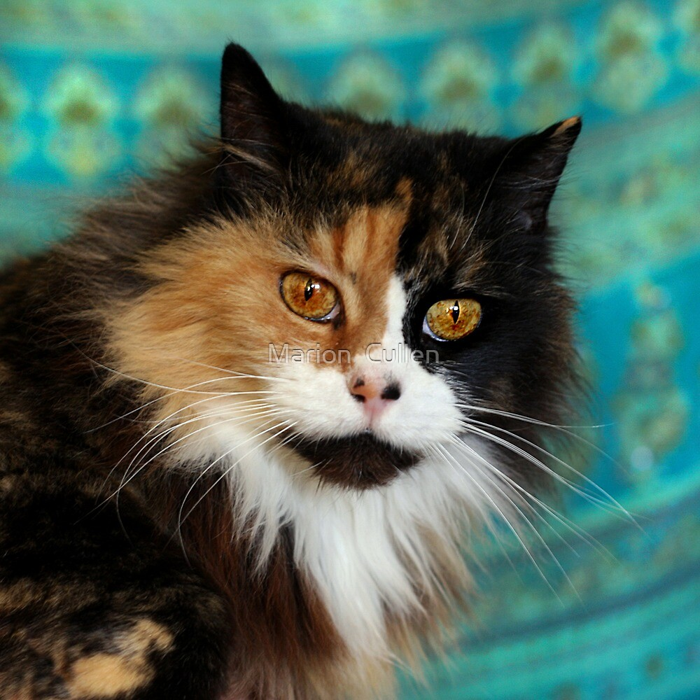 Calico Kitty by Marion  Cullen