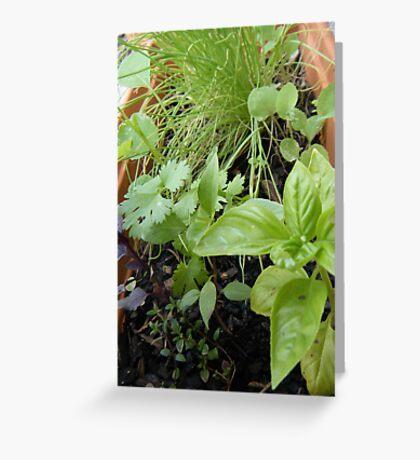 Herbs Greeting Card