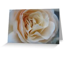 Apricot Souffle Rose Greeting Card