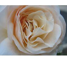 Apricot Souffle Rose Photographic Print
