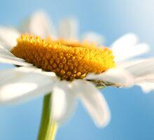 You are My Sunshine by Tamara Brandy