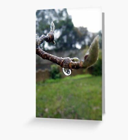 Winter Magnolia Greeting Card