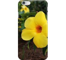 Mandevilla iPhone Case/Skin