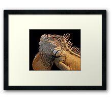 Iguana King Framed Print