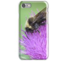 Common Thistle and Bumblebee iPhone Case/Skin