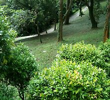 An uphill but green path. by shwetha