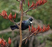tui in the flax  by Brenda Anderson