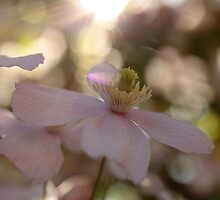 a bit of Sunday morning magic? by Magic-at-Photos