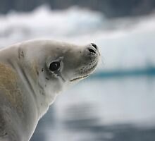New Friend in Antarctica by Lisa Davidson