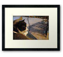 cat again Framed Print