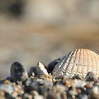 Seashells on the seashore.... by Heather Thorsen