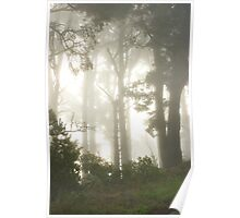 Foggy morning at Tilden, Berkeley, California Poster